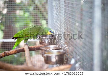 Papagáj egy kék zöld madár állatok Stock fotó © pavel_bayshev