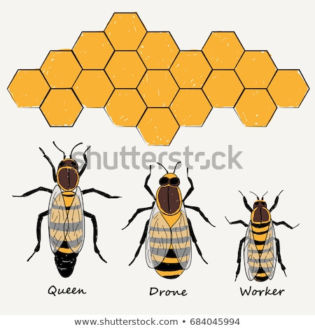 Queen Bee with Drone Bees on Honeycomb Stock photo © Qingwa