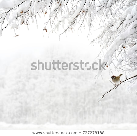 congelada · rio · floresta · inverno · natureza - foto stock © photocreo