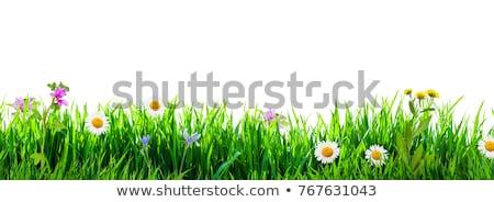 Flor grama flores páscoa jardim quadro Foto stock © adamson