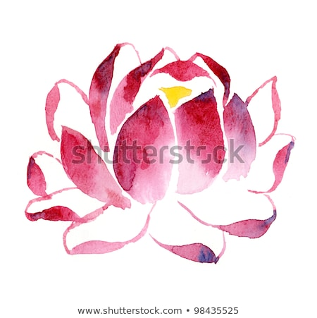handmade watercolour illustration of blooming lotus stock photo © galyna