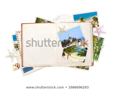 otwarte · kopercie · Fotografia · Rozgwiazda · odizolowany · biały - zdjęcia stock © adamson