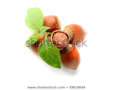 detail of hazelnut bush with hazlnuts Stock photo © phbcz
