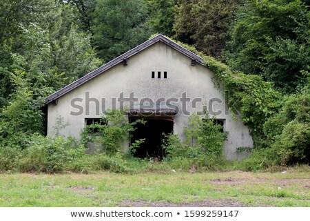 broken door and overgrown plants Stock photo © sirylok