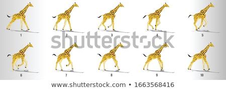 africano · quadro · girafas · ilustração · savana · viajar - foto stock © dayzeren