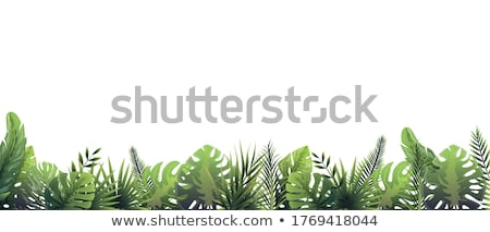 Botanical background. Green lawn with ferns. Stock photo © linfernum