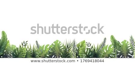 Botanique vert pelouse fougères arbre printemps Photo stock © linfernum