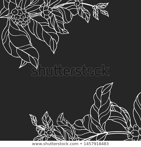 Coffe flower Stock photo © dinozzaver