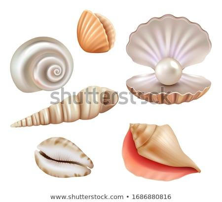 kagylók · szett · gyönyörű · tengerpart · természet · terv - stock fotó © cteconsulting