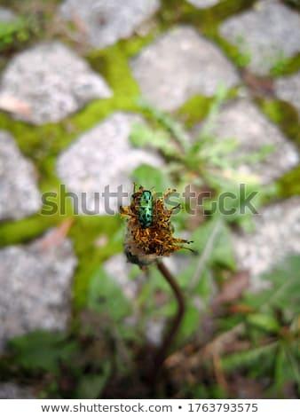 緑 点在 カブトムシ 移動 ジューシーな 葉 ストックフォト © stocker