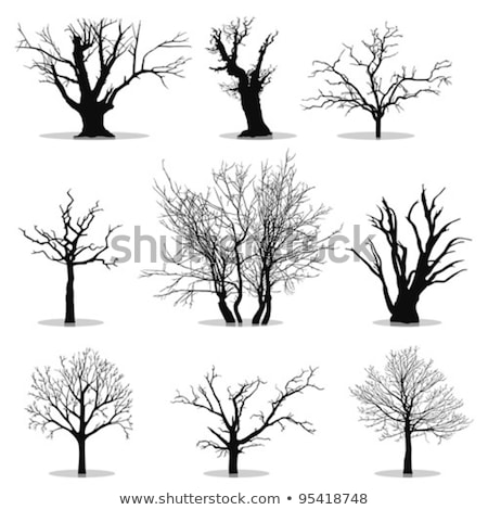 isolated deciduous tree in the winter Stock photo © Zerbor