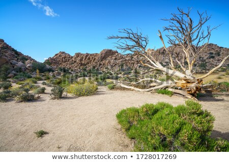 Manzaralı kayalar ağaç park gizlenmiş vadi Stok fotoğraf © meinzahn