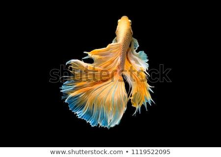 Bella pesce profondità mare acqua natura Foto d'archivio © anbuch