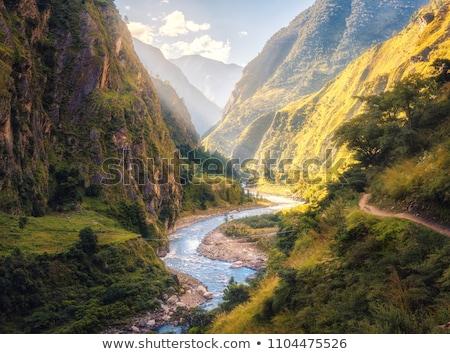 Groene landschap bomen pad rivier bos Stockfoto © pab_map