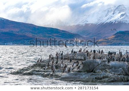 Rei colônia ilha bigle canal mar Foto stock © xura
