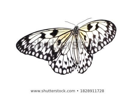 rice paper butterfly Stock photo © compuinfoto