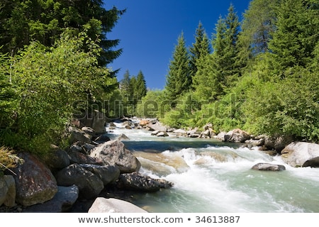 vermigliana stream trentino italy stock photo © antonio-s