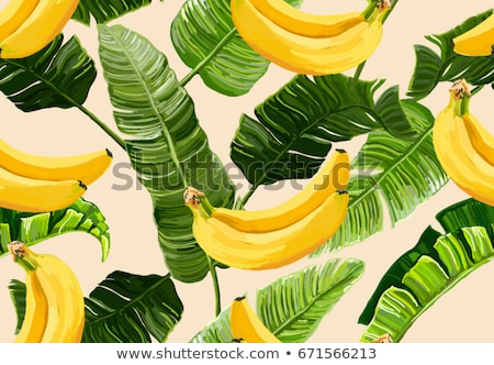 Vintage bananów bezszwowy projektu owoców tle Zdjęcia stock © illustrart