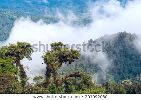 From Andes to Amazon, View of the tropical rainforest, Ecuador Stock photo © xura