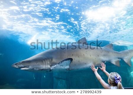 若い女性 触れる サメ タンク 水族館 少女 ストックフォト © wavebreak_media