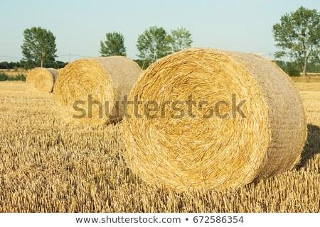 Vee hooi kudde New Zealand rijke Stockfoto © rghenry