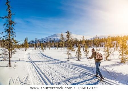 Cross Country Skiing Path - Winter Landscape Stock photo © stickasa