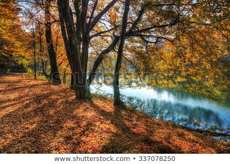 fák · tó · ősz · színes · levelek · égbolt - stock fotó © smuki