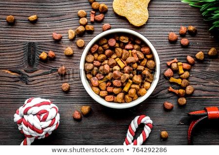Domowych żywności człowiek psa zabawy kolor Zdjęcia stock © tiKkraf69