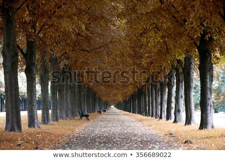 autumn landscape herrenhauser allee in hannover germany stock photo © vladacanon
