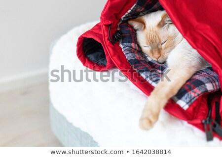 Cat dormire vestiti indietro Foto d'archivio © Komar