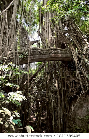 Singe forêt célèbre lieu bali Photo stock © johnnychaos
