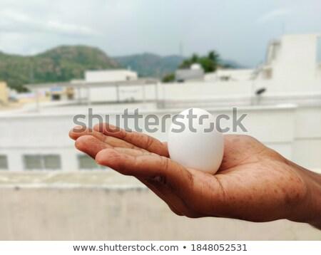 tyúk · barna · tojás · textúra · természet · háttér - stock fotó © nito