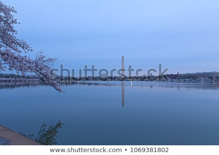 Cherry Blossoms Around Washington DC Monument stock photo © Qingwa