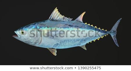 тунца изолированный иллюстрация морепродуктов белый рыбы Сток-фото © ConceptCafe