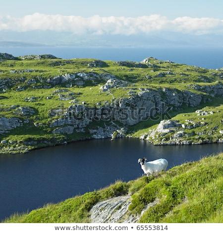 Cabeça península cortiça Irlanda viajar paisagens Foto stock © phbcz