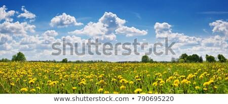 Citromsárga pitypang legelő fantasztikus mező friss Stock fotó © Leonidtit