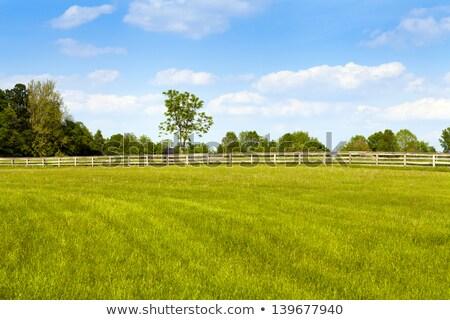 autumn landscape with a wooden fence stock photo © kotenko