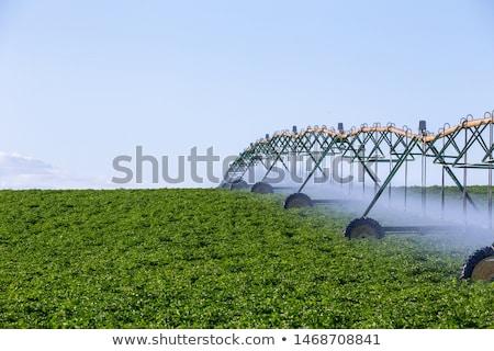 Automatique irrigation agriculture domaine paysage ciel Photo stock © Mikko