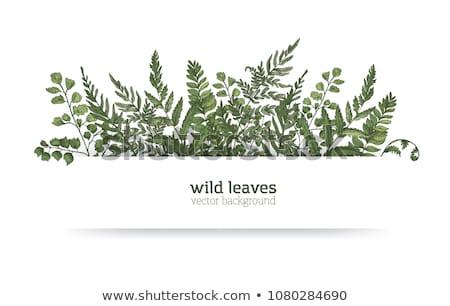 Fronteira modelo mata folhas ilustração madeira Foto stock © colematt