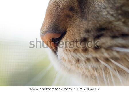 Extreme closeup Stock photo © Anna_Om