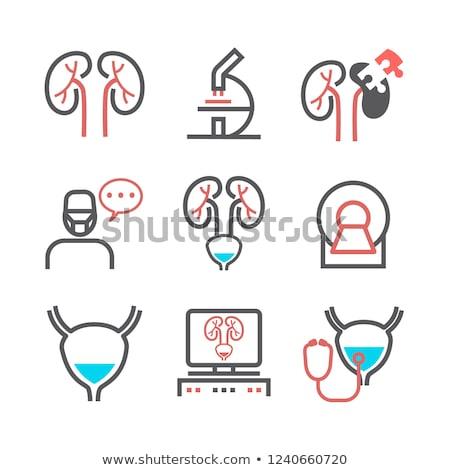 hólyag · vizsgálat · közelkép · egészséges · egészségtelen · terv - stock fotó © tefi