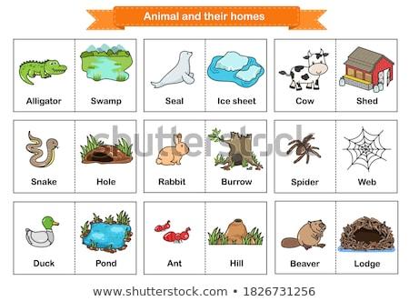 аллигатор плакат письма фон животные карт Сток-фото © colematt