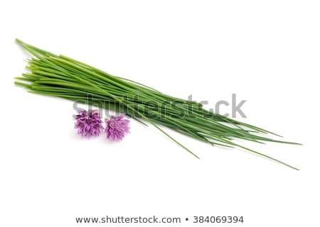 Bos vers bieslook witte groene string Stockfoto © Digifoodstock