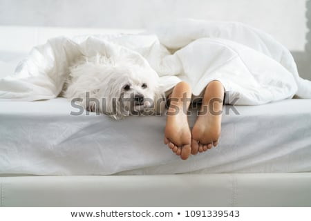 Dog and woman feet. Stock photo © iofoto