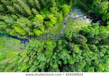 美しい · 自然 · 緑 · 木 · 晴れた · 午後 - ストックフォト © artjazz