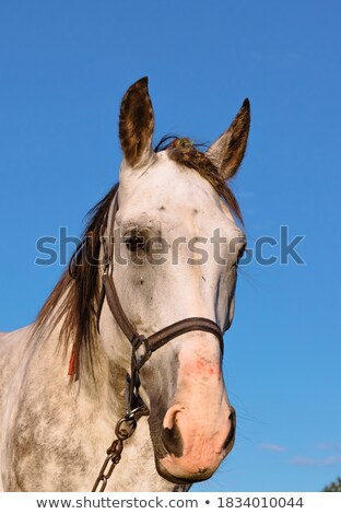 Horses Colourful Banner in Blue Circles on White Stock photo © robuart