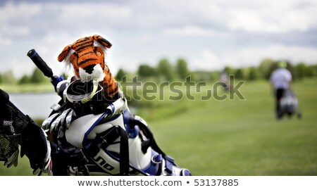 тигр защиту Cap гольф клуба Cute Сток-фото © lichtmeister