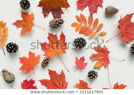Outono vermelho bordo folhas branco tabela Foto stock © pressmaster