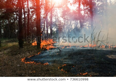 burned forest nature pollution Stock photo © romvo
