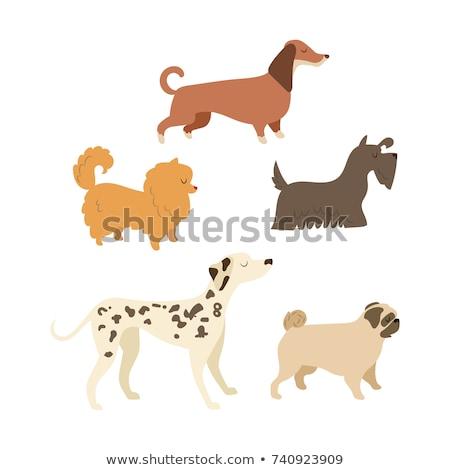 Chinese Pug Dog Breed Cartoon Retro Drawing Stock photo © patrimonio